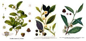 Plantas Medicinais segundo a USP