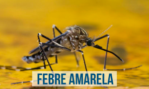 Quais sao os sintomas da febre amarela